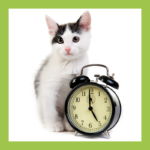 Cat with clock